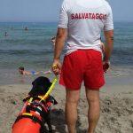 Labrador Retriever nero Doxy a mare