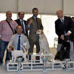 Labrador Retriever giallo su podio con Fabrizio in esposizione di Caltanissetta