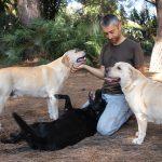 Gruppo di Labrador Retriever giallo e nero che giocano con Fabrizio