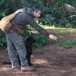 Labrador Retriever nero prima di un riporto