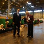 Labrador Retriever Rocheby con Marion Hopkinson al Crufts